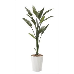 光触媒 人工観葉植物 ストレチア1.6m フェイクグリーン hikarinorakuen 02