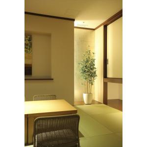 光触媒観葉植物 オリーブ1.6m|hikarinorakuen