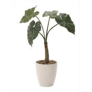 光触媒観葉植物 くわず芋78 hikarinorakuen
