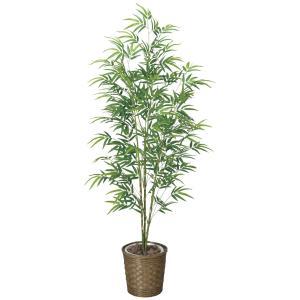 光触媒観葉植物 青竹 1.7m|hikarinorakuen