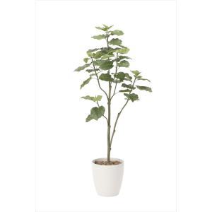 光触媒観葉植物 ウンベラータツリー1.8m|hikarinorakuen