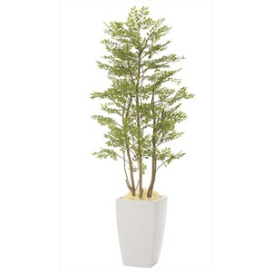 光触媒観葉植物 アーバンゴールデンリーフ1.8m|hikarinorakuen