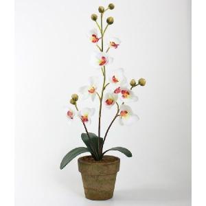 光触媒 光の楽園 胡蝶蘭ポット L ホワイト|hikarinorakuen