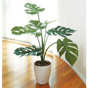 光触媒人工観葉植物 モンステラ75|hikarinorakuen