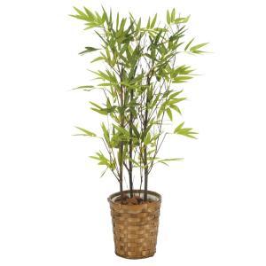 光触媒観葉植物 黒竹 75cm|hikarinorakuen