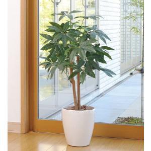 光触媒 観葉植物 パキラ 90|hikarinorakuen