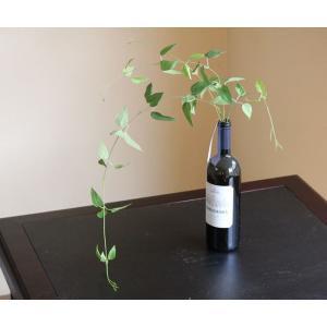 光の楽園 光触媒 観葉植物 リキュウソウ|hikarinorakuen