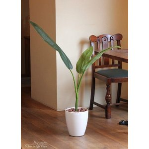 光触媒観葉植物 トラベラーズパーム H1.1m|hikarinorakuen