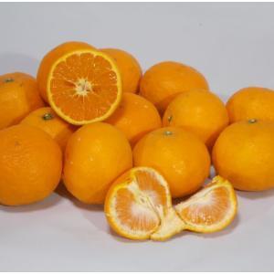 有田 なつみオレンジ 訳あり 10kg...
