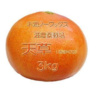 【完売しました。】瀬戸田産 天草(あまくさ)みかん 3kg箱詰♪ 見た目はイマイチですよ♪|hiroshimatsuya