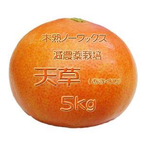 【完売しました。】瀬戸田産 天草(あまくさ)みかん 5kg箱詰♪ 見た目はイマイチですよ♪|hiroshimatsuya