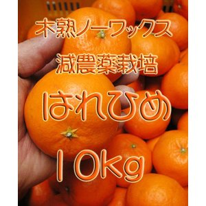 【完売しました。】瀬戸田産 はれひめ 10kg箱詰♪ 見た目はイマイチですよ♪|hiroshimatsuya