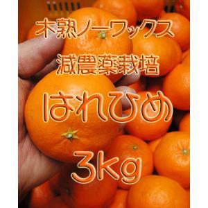 【完売しました。】瀬戸田産 はれひめ 3kg箱詰♪ 見た目はイマイチですよ♪|hiroshimatsuya