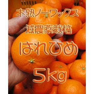 【完売しました。】瀬戸田産 はれひめ 5kg箱詰♪ 見た目はイマイチですよ♪|hiroshimatsuya