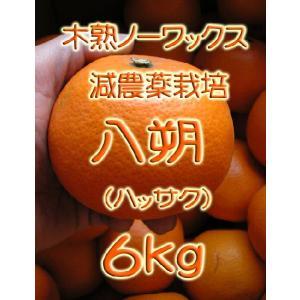 【完売しました。】瀬戸田産 八朔(ハッサク) 6kg箱詰♪ 見た目はイマイチですよ。|hiroshimatsuya