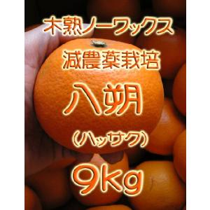【完売しました。】瀬戸田産 八朔(ハッサク) 9kg箱詰♪ 見た目はイマイチですよ。|hiroshimatsuya