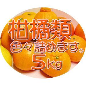 【完売しました。】広島瀬戸田産 旬の柑橘類を詰め合せてお届け致します 5kg入り 送料無料♪|hiroshimatsuya