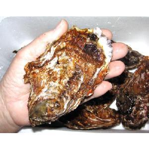 広島 網登海産の生かき 殻付き 1個 加熱用 産地直送|hiroshimatsuya