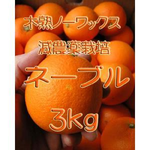 【完売しました。】瀬戸田産 ネーブル 3kg箱詰♪ 見た目はイマイチですよ。|hiroshimatsuya