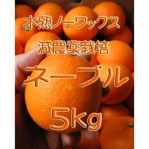 【完売しました。】瀬戸田産 ネーブル 5kg箱詰♪ 見た目はイマイチですよ。|hiroshimatsuya