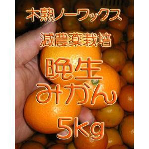 【完売しました。】瀬戸田産 晩生(おくて)みかん 5kg箱詰♪ 見た目はイマイチですよ♪|hiroshimatsuya