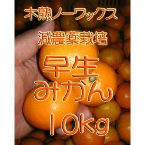 【制限中】瀬戸田産 早生(わせ)みかん 10kg箱詰♪ ご家庭用|hiroshimatsuya