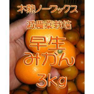 【制限中】瀬戸田産 早生(わせ)みかん 3kg箱詰 ご家庭用|hiroshimatsuya