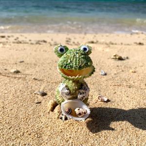 貝がらカエル|hit-okinawa