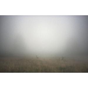 Trace of Fog|hkt-tsutayabooks