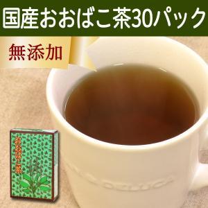 国産おおばこ茶5g×30パック 徳島県産 農薬不使用 煮出し用ティーバッグ ティーパック 自然健康社