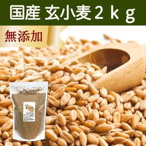 国産玄小麦2kg ビタミンB群、E含有のプチプチ小麦粒 おいしいご飯|hl-labo