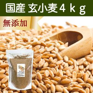 国産玄小麦4kg ビタミンB群、E含有のプチプチ小麦粒 おいしいごはん|hl-labo