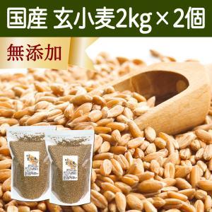 国産玄小麦2kg×2個 ビタミンB群、E含有のプチプチ小麦粒 おいしいご飯|hl-labo
