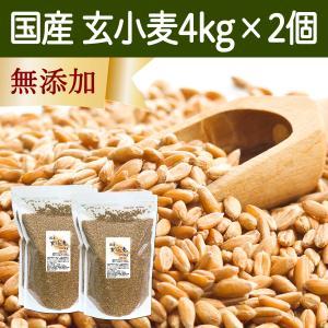 国産玄小麦4kg×2個 ビタミンB群、E含有のプチプチ小麦粒 おいしいごはん|hl-labo