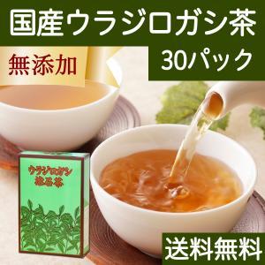 送料無料 国産ウラジロガシ茶7g×30パック 徳島県産 農薬不使用 煮出し用ティーバッグ ティーパック 自然健康社|hl-labo