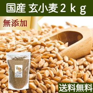 送料無料 国産玄小麦2kg ビタミンB群、E含有のプチプチ小麦粒 おいしいご飯|hl-labo
