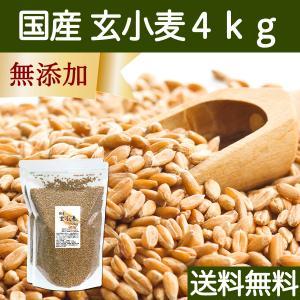 送料無料 国産玄小麦4kg ビタミンB群、E含有のプチプチ小麦粒 おいしいごはん|hl-labo