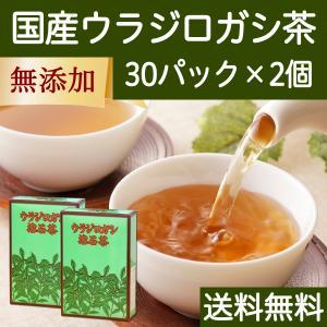国産ウラジロガシ茶30パック×2個 徳島県産 農薬不使用 送料無料|hl-labo