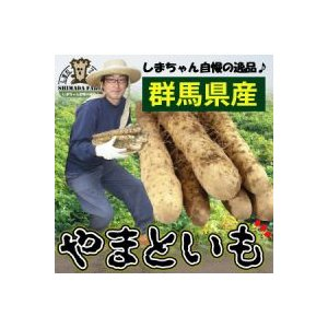大和芋 2kg詰め ギフトBOX 島田ファーム産 群馬 群馬県産 とろろ ヤマトイモ ヤマト芋 やま...