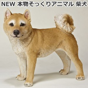 NEW 本物そっくりアニマル 柴犬 犬型置き物/オブジェ プレゼントにも最適|hmy-select