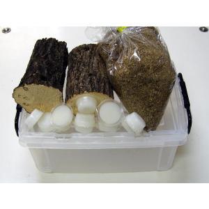 Qbox30産卵セット|hobby-club
