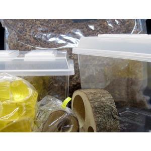 カブト成虫飼育セット 中型種用|hobby-club