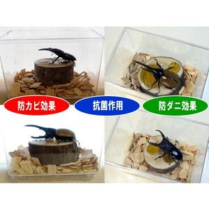 ひのきチップ 抗菌・防カビ・防ダニ効果|hobby-club