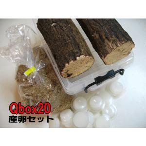 Qbox20産卵セット オオクワガタ産卵用|hobby-club