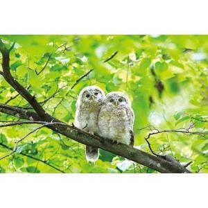幸せを呼ぶ白フクロウ(03-896)300ピース やのまん【02月予約】 hobby-zone