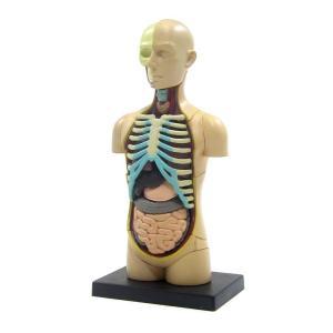 立体パズル 4D VISION 人体解剖 No.01 胴体解剖モデル アオシマ|hobby-zone