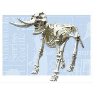 ポーズスケルトン 哺乳類 ゾウ リーメント|hobby-zone