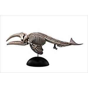 アクアテイルズ 海の生物シリーズ Vol.2 ATP011 セミクジラ骨格 海洋堂|hobby-zone