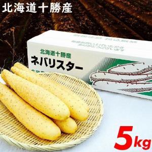 母の日 2018年度 出荷開始 北海道産 長芋 ネバリスター(5kg) / とろろご飯 野菜 とろろいも 自然薯 大和芋|hokkaido-gourmation
