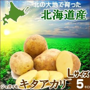 ギフト 贈り物 じゃがいも 越冬じゃがいも 北海道産 じゃがいも キタアカリ (Lサイズ)1箱 5kg入り / 5キロ 北海道 きたあかり hokkaido-gourmation